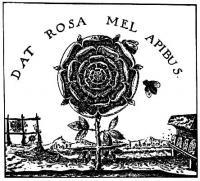 rosecross_02.jpg